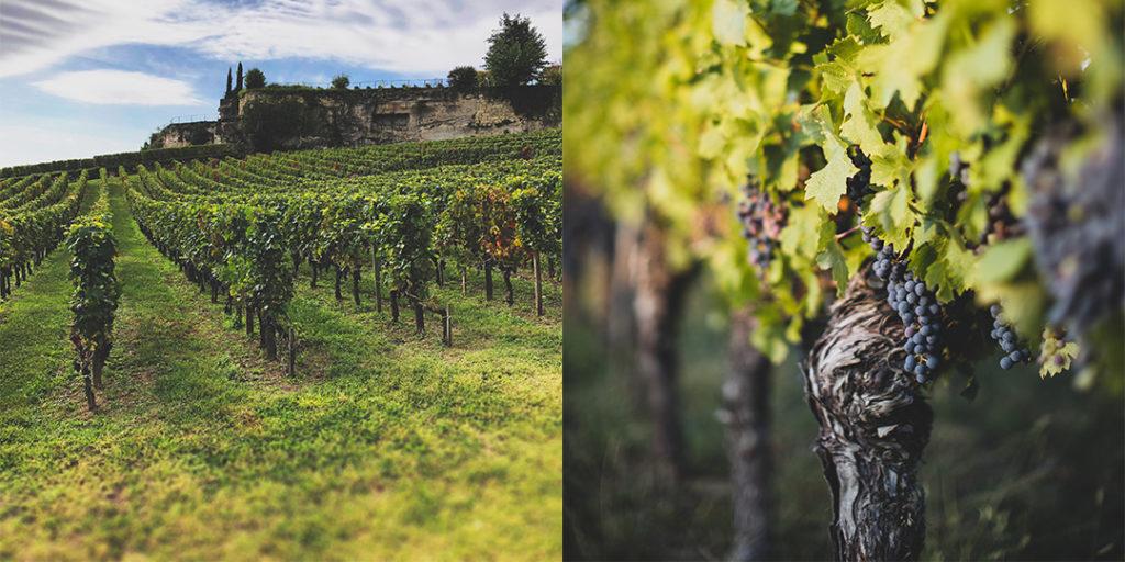 Hållbart vin innefattar allt från miljö, socialt och ekonomiskt ansvar.