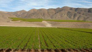 Chile vin